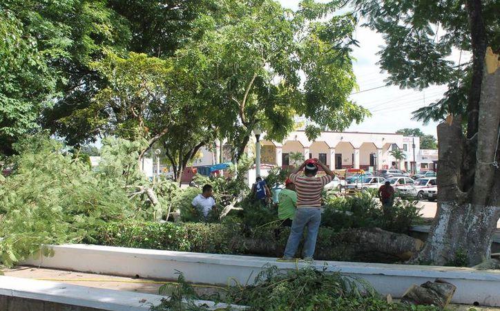 Personal de Protección Civil realizaron los trabajos. (Raúl Balam/SIPSE)