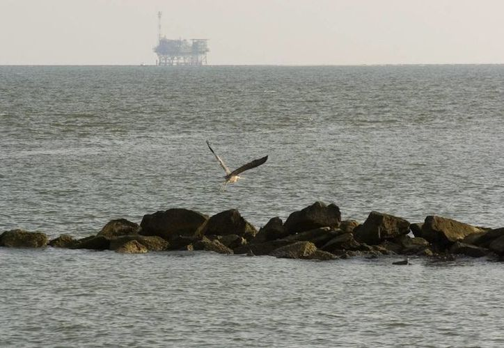 Se pronostica que el impacto ambiental del derrame sea mayor, ya que ocurrió en una zona con alta migración de aves. (EFE)