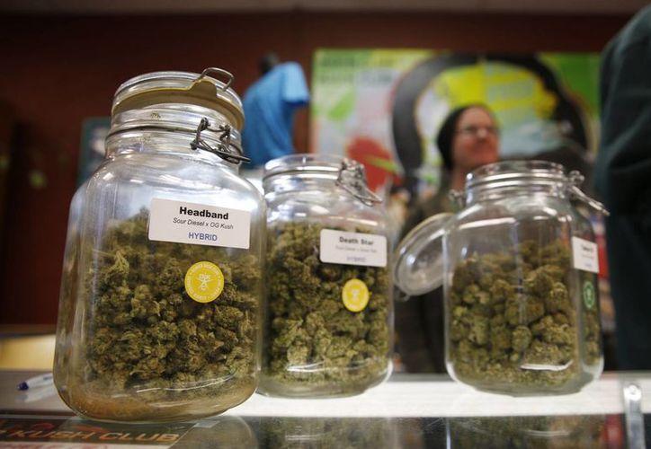 Frascos de diferentes tipos de marihuana en un establecimiento de Denver. Los empresarios que se dedican a comerciar con la yerba de manera legal solicitaron ante un juez federal entrar al sistema bancario. (Agencias)
