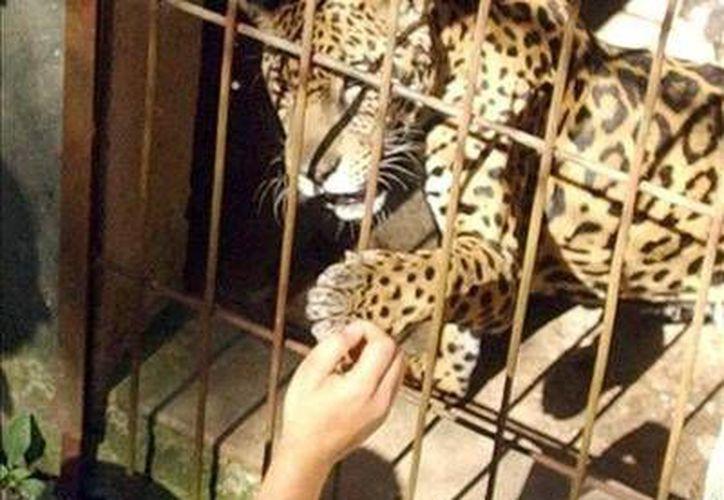 El tráfico de especies es una de las causas principales de la extinción de flora y fauna en el mundo. (Ilustrativa/Internet)