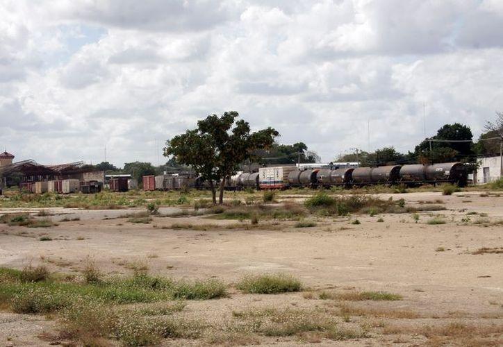 Los espacios públicos de Mérida han sido reforestados con cerca de 60 mil árboles. (Imagen ilustrativa/ SIPSE)