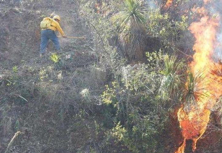 El incendio se ubica a 10 kilómetros al noroeste del ejido Nuevo Tabasco. en Bacalar. (Contexto/Internet)