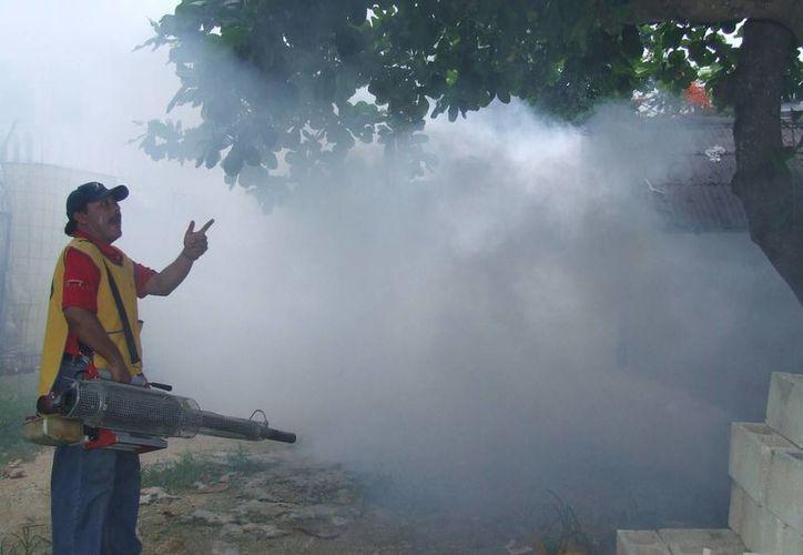Personal de Salud fumiga predios y áreas del verdes del poblado. (Rossy López/SIPSE)