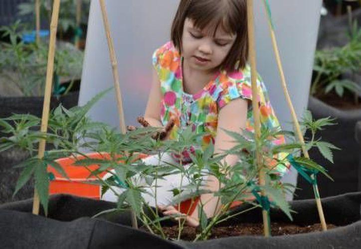 Charlotte ya tiene seis años y sus ataques solo ocurren dos o tres veces al mes. (gazette.com)