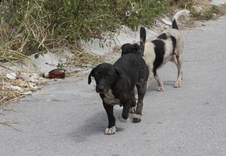 Organismos altruistas y el CAC, conciencian a los ciudadanos sobre que las mascotas no son un objeto, sino un miembro más de la familia. (Tomás Álvarez/SIPSE)