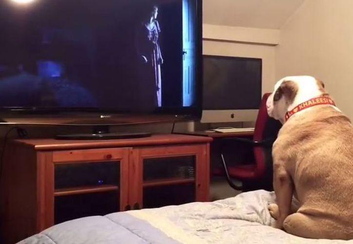 Al ver en el filme que los niños están amenazados, la perrita ladra con fuerza. (Foto: YouTube)