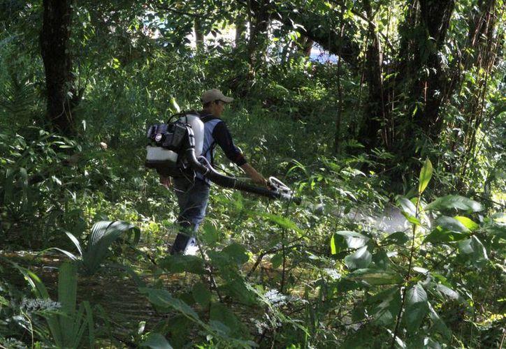 Autoridades de Salud redoblarán las medidas preventivas, principalmente en la eliminación de los criaderos de moscos. (Ángel Castilla/SIPSE)
