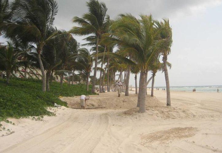 Mayakoba pretende hacer una reforestación similar a la que ya han hecho otros hoteles. (Adrián Barreto/SIPSE)