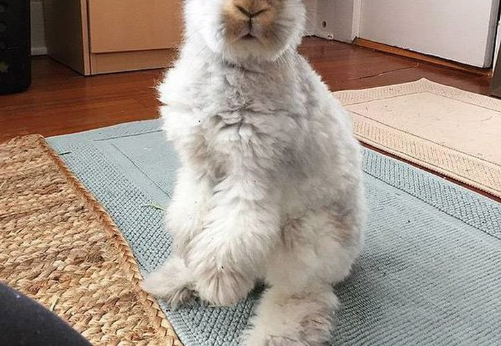Wally es un conejo de angora, que ha conquistado a los usuarios de lnstagram gracias a su look fashion y sus excéntricas fotografías. (wally_and_molly/ Instagram)