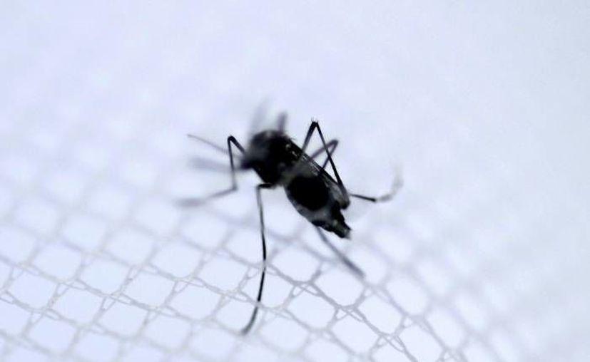 El director del Instituto de Vigilancia de Salud Pública francés detalló que el primer caso de zika (transmitido por el mosco Aedes Aegypti) detectado por vía sexual en Francia se trata de una mujer cuya pareja había viajado a Brasil. (EFE/Archivo)