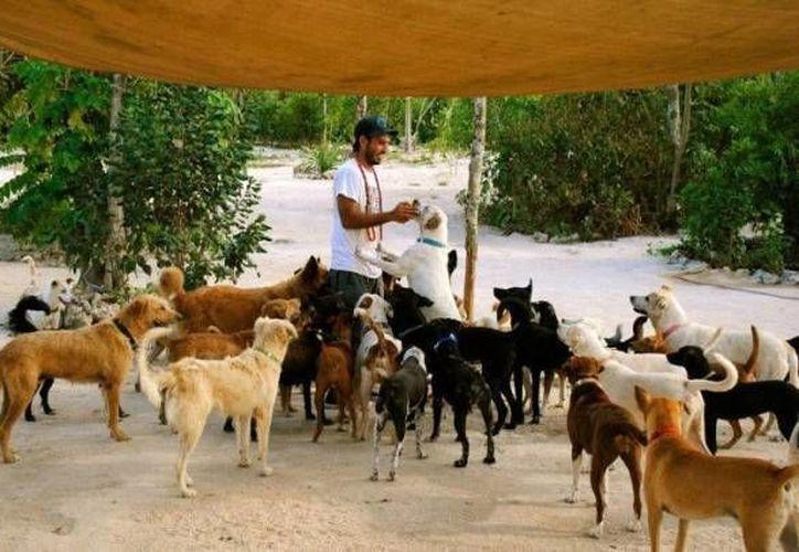 Pro Animal y Tierra de Animales han demostrado trabajar por el bienestar de los animales. (Archivo/SIPSE)