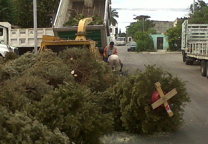 Por 20 pesos un camión recolector de basura se lleva el pino navideño. (Foto: Milenio novedades)
