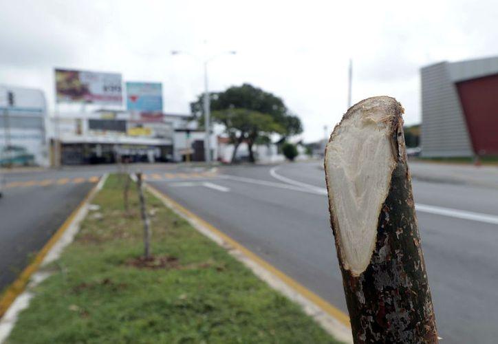 Así quedó la avenida Líbano tras el corte de los 16 árboles (Foto: Milenio Novedades)