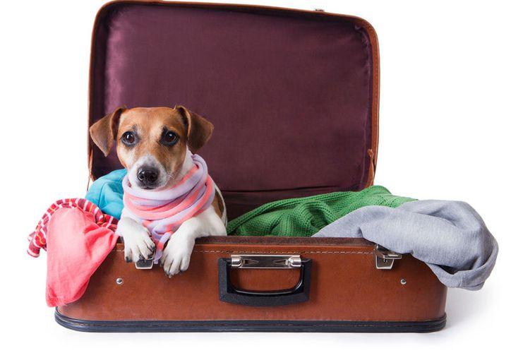 Viajar con una mascota implica responsabilidades para con su cuidado. (Redacción/SIPSE)