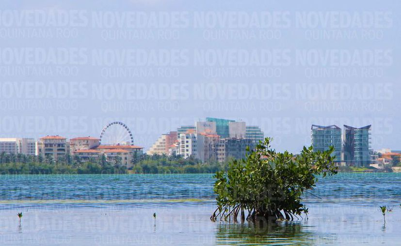Han desaparecido miles de hectáreas de manglar debido al desarrollo turístico en el estado. (Paola Chiomante/SIPSE)