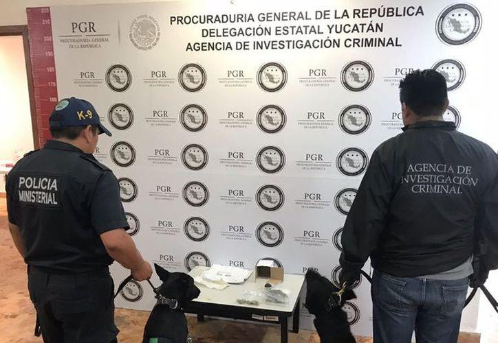 La PGR y el Ministerio Público se encargaron de integrar la carpeta de investigación y comenzar las indagatorias para dar con los responsables. (SIPSE)