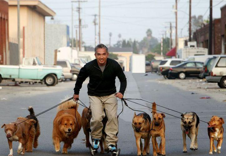 Los perros de César Millán corrieron detrás del ladrón. (Foto: Tiempo Libre)