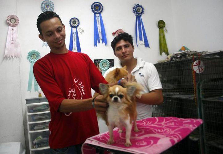 Especialistas señalan que cada raza de perro tiene sus propias necesidades al momento de que se les corte el pelo. (Milenio Novedades)