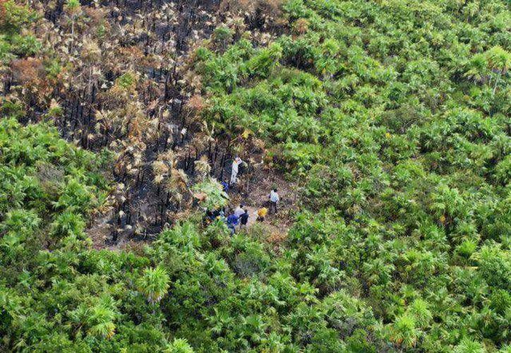 El siniestro afectó 35.5 hectáreas de vegetación. (Redacción)