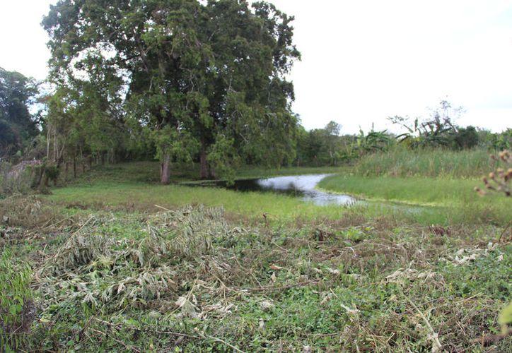 El objetivo es la conservación de seis millones de hectáreas de Áreas Naturales Protegidas de tres países. (Joel Zamora/SIPSE)