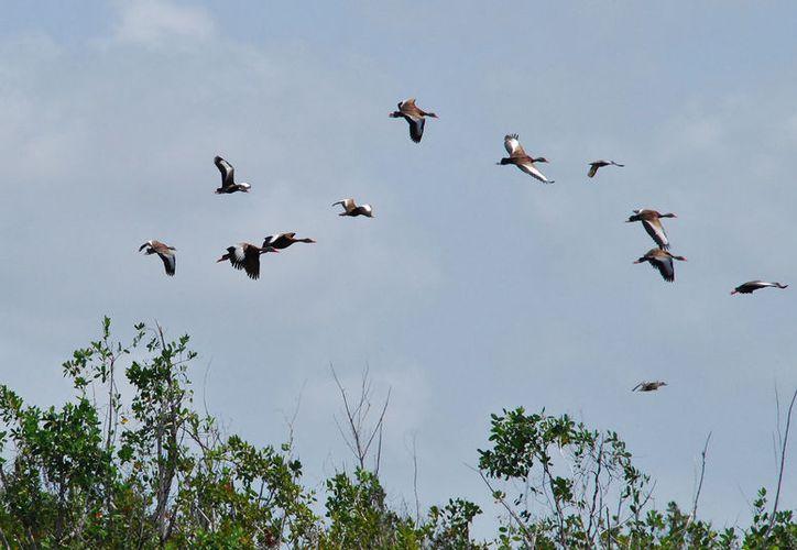 El 48% de las aves en la Península de Yucatán, se localiza en la isla de Cozumel. (Foto: Gustavo Villegas)