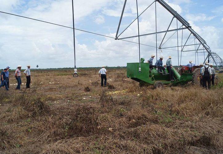 Suman 25 sistemas de riego en unas 762.21 hectáreas. (Edgardo Rodríguez/SIPSE)