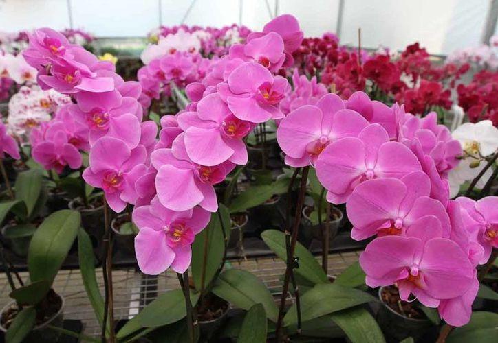 La Profepa aseguró 337 ejemplares de flora y fauna silvestres, como las orquídeas salvajes, en Michoacán. (Notmex/archivo)