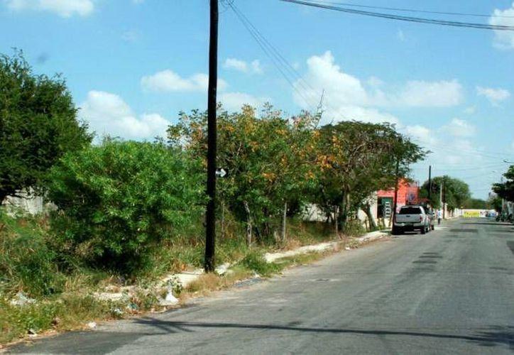 La Comuna señala que quedan 790 baldíos por inspeccionar. (Milenio Novedades)