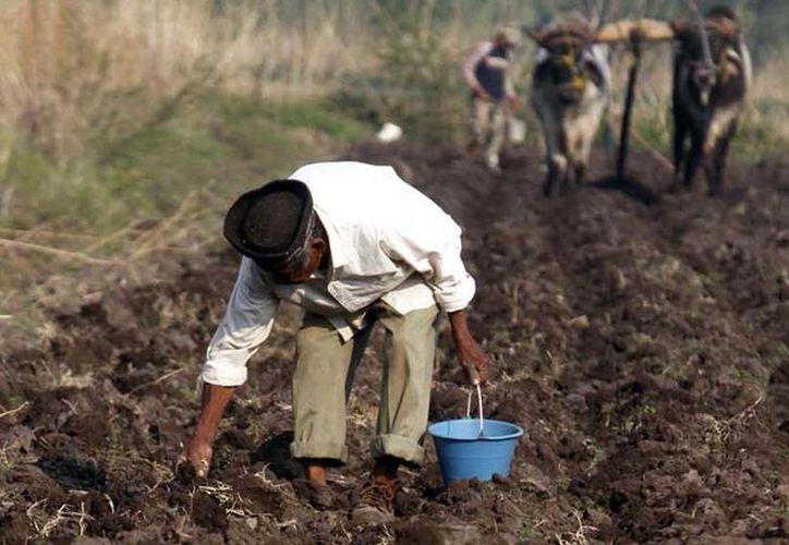 Piden solución al problema de tierras que fueron despojados. (Carlos Castillo/SIPSE)