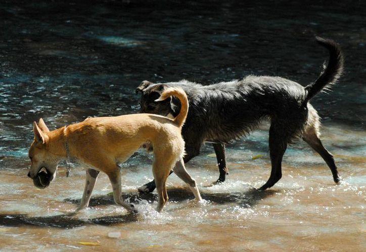 No precisan la cantidad de perros que presuntamente realizaron el ataque. (Notimex)