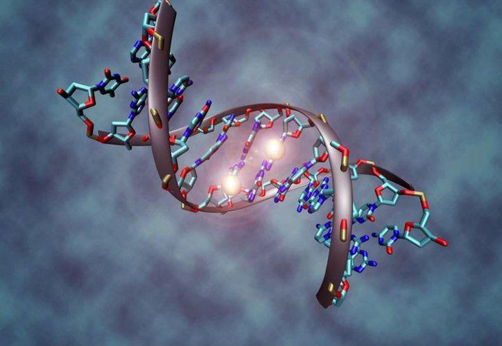 El principal factor de riesgo está en la información proveniente del ADN de ambos padres, señalaron los médicos. (Contexto/Internet)