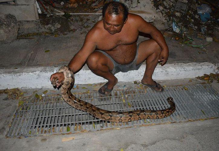 El reptil medía más de 2 metros. (Foto: MIlenio Novedades)