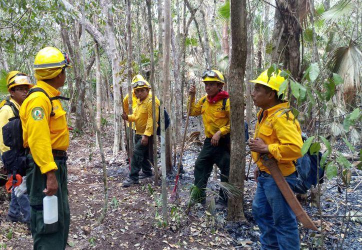 Las brigadas de combatientes están atendiendo los incendios. (Joel Zamora/SIPSE)