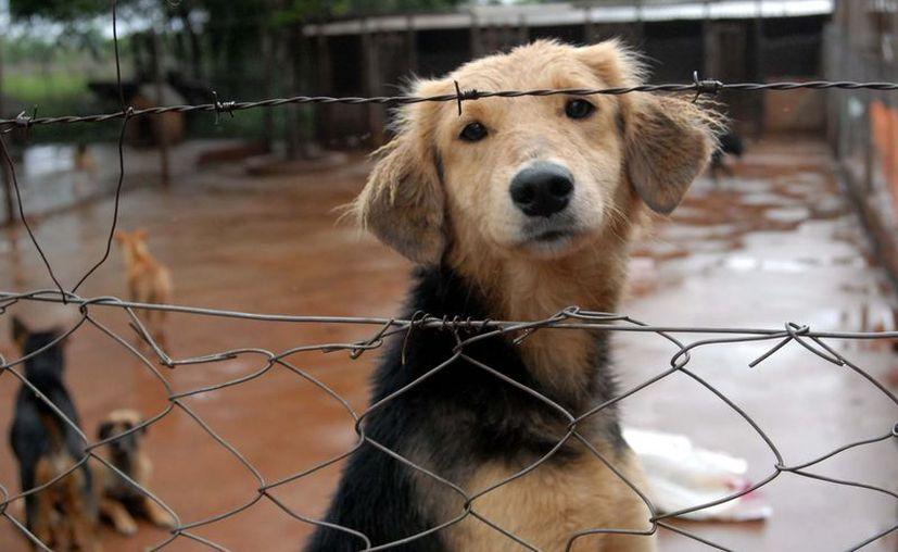 Los criaderos comerciales tienen como objetivo reproducir en masa animales para la venta al público. (Revista Weepec)