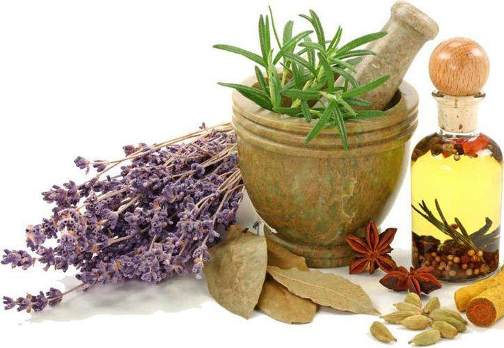 El uso de plantas ayudan a prevenir enfermedades y padecimientos típicos. (Imagen de contexto/hombredemaiz.com.mx)