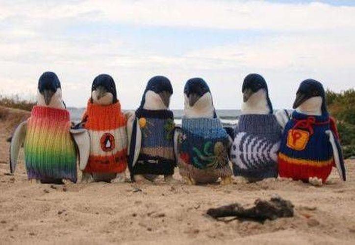Los activistas han convocado concursos para crear el suéter más lindo creado para este animal. (Fundación de Phillip Island)