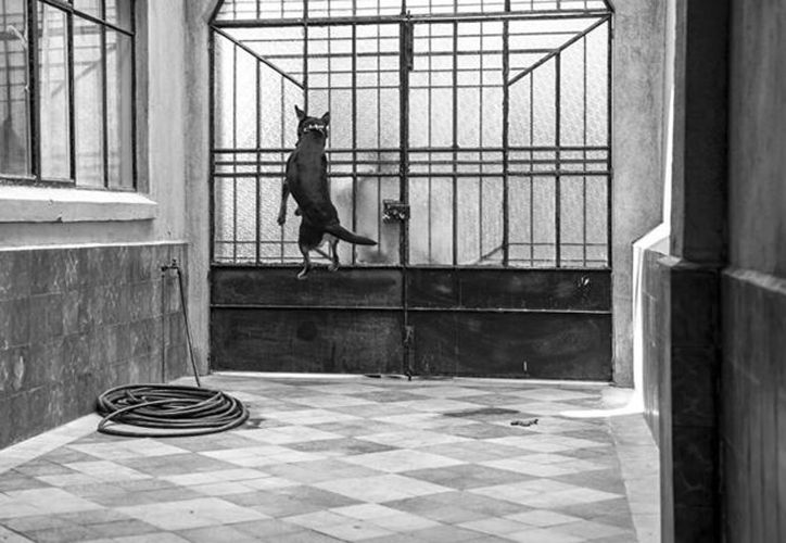 Borras, el famoso perro de Roma, también inspiró una cumbia en Youtube. (Foto: Youtube).