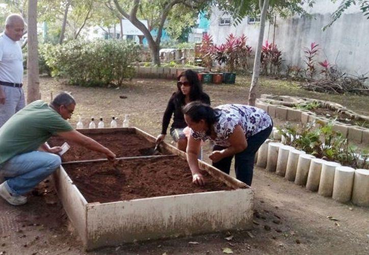Derivado del programa estatal Proyecto de Traspatio, es la segunda ocasión que se otorgan semillas y asesoría sin costo a beneficiarios. (SIPSE)