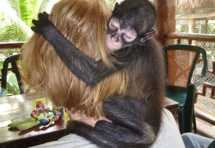 Una pareja decidió darle una nueva oportunidad de vida a los monos araña que han sufrido maltrato. (Foto: @TheJunglePlace)
