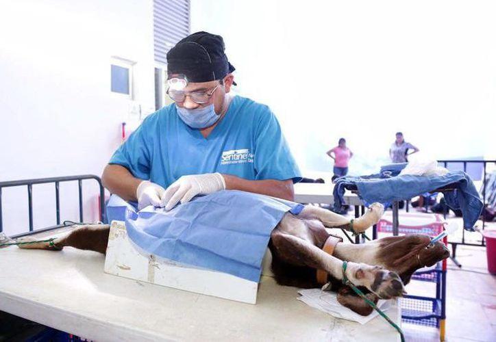 Ahora los médicos podrán denunciar a los dueños que incurran en maltrato animal. (Archivo/ SIPSE)