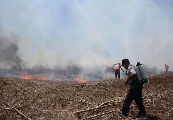 Uno de los fenómenos climáticos que más afecta a las actividades económicas del país es la sequía. En la imagen unas personas tratan de apagar un incendio. (Archivo/SIPSE)