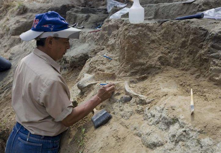 Paleontólogos salvadoreños trabajan en la excavación del nuevo sitio paleontológico Nueva Apopa. (EFE)