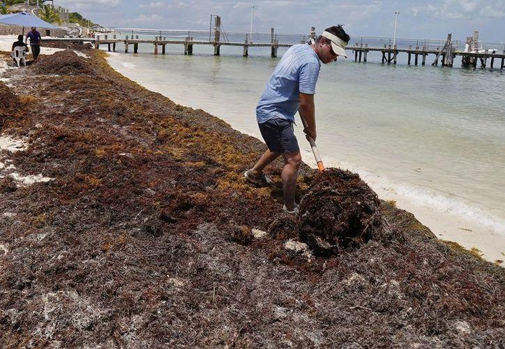 En algunos casos los recolectores lo dejan amontonado sobre la arena. ( Eva Murillo/SIPSE)