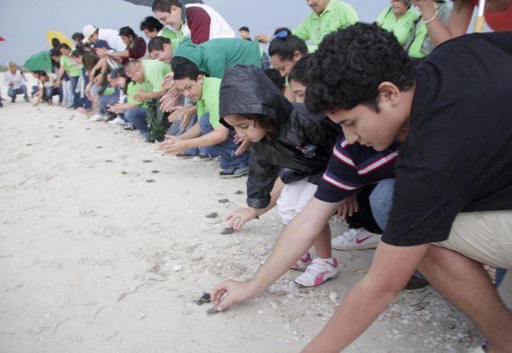 A través de las acciones conjuntas de la Semarnat y la Seduma, niños del Club Especial Ayelem A.C. liberaron tortugas de carey en Sisal. (Agencias)