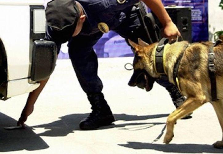 La detección se llevó a cabo en el Aeropuerto de Guadalajara. (Internet/Archivo)