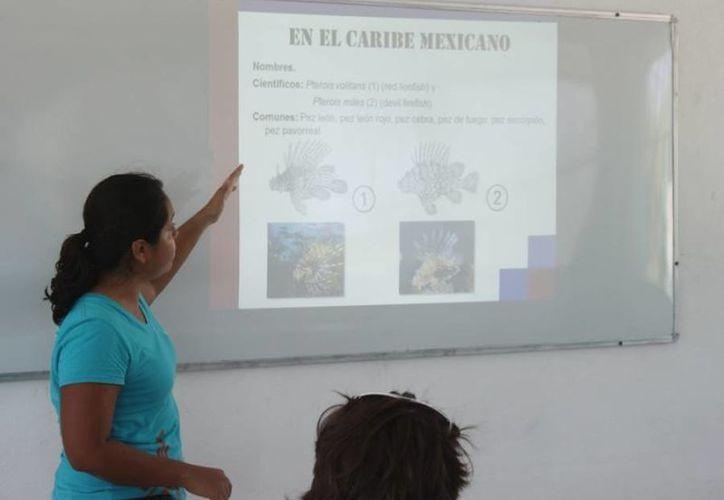 """El taller se llevará a cabo en la playa """"Posada del Mar"""". (Cortesía/SIPSE)"""