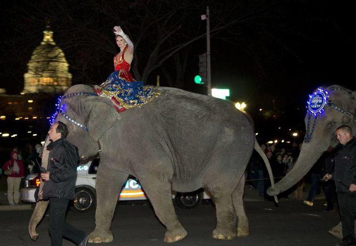 Imagen del 19 de marzo de 2013 de una marcha de elefantes del Ringling Bros. and Barnum & Bailey frente al Capitolio, rumbo al Verizon Center para una presentación. (Foto: Alex Brandon/AP)