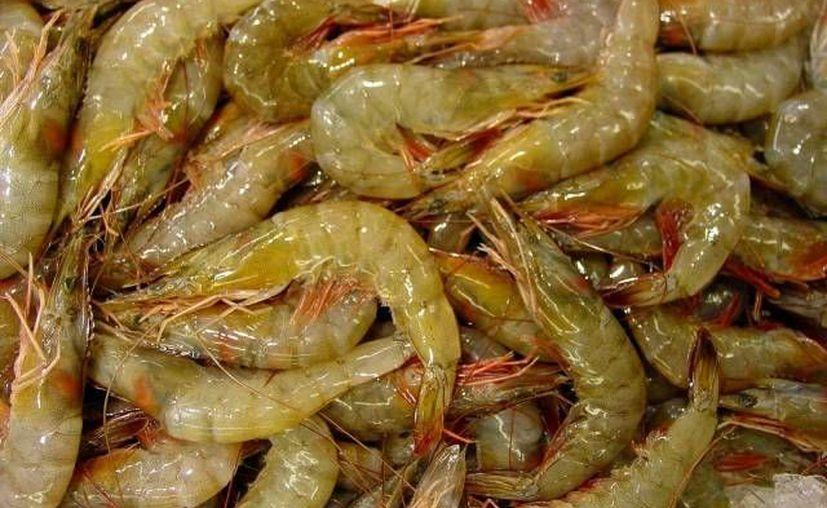 La captura del crustáceo es la actividad más importante en el litoral del Golfo. (Archivo/SIPSE)