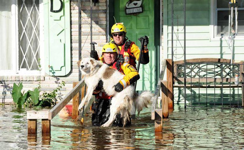 Miembros de los equipos de búsqueda urbana y rescate de Missouri de la Agencia Federal de Manejo de Emergencias (FEMA, por su sigla en inglés) buscan residentes atrapados en sus casas a consecuencia del huracán Matthew en un barrio de la ciudad de Lumberton, Carolina del Norte. (EFE/ FEMA)