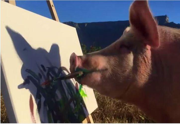 El animal fue rescatado de una granja en Sudáfrica por Joanne Lefson. (Foto: Internet/Youtube)